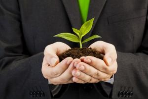 Businessman holding seedling